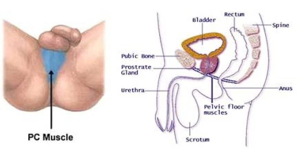 Higher sperm volume