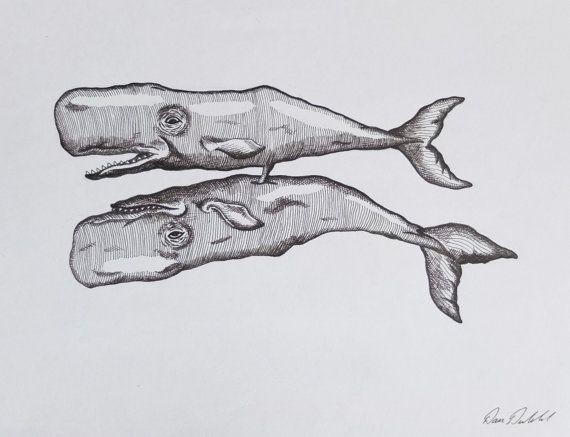 Draw sperm whale