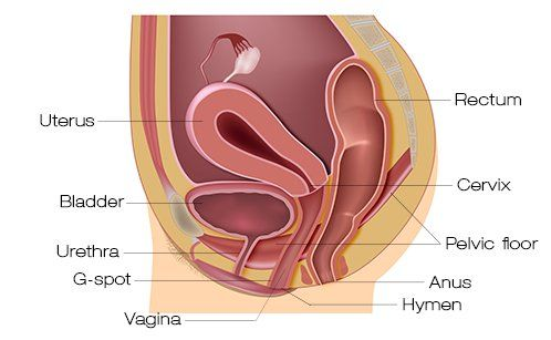 Kickback recommendet anus Hymen on looking bulge