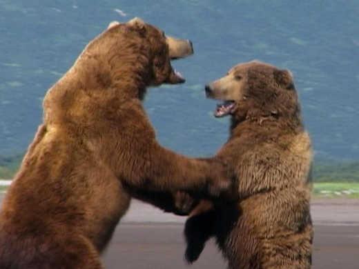 Paris reccomend Grizzly bear adult swim music