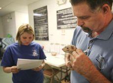 Turtle reccomend Big lick ferret shelter