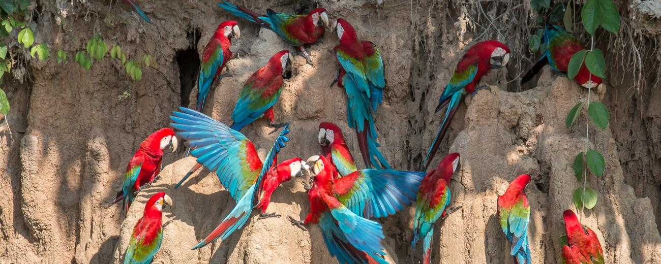 Half-Pipe reccomend Macaw clay lick